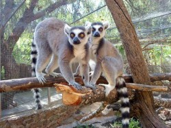 Vilamoura - Krazy World Zoo