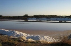 Tavira - Nature Trip - Salt Pans in Ria Formosa