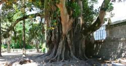 Coimbra - Botanical Garden