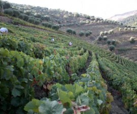 Porto - Douro Wine Harvest by Museu do Douro
